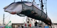 Japan hints at leaving IWC after whaling proposal nixed